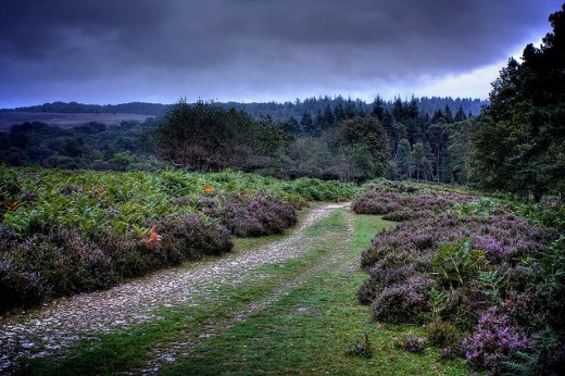 A track in running across New Forest heathland towards a forested area