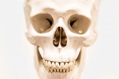 An illustration of the human skull