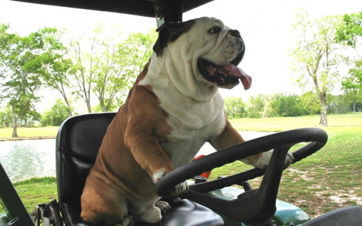 Driving toward back to back Bulldog picks