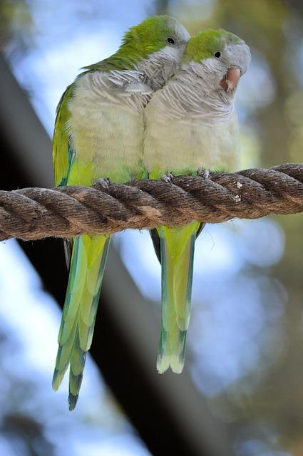 Birds do it.