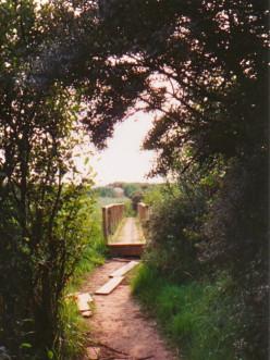 Bridge across the Marsh