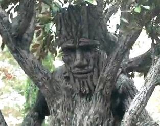 Incredible Tree Spirit Costume!