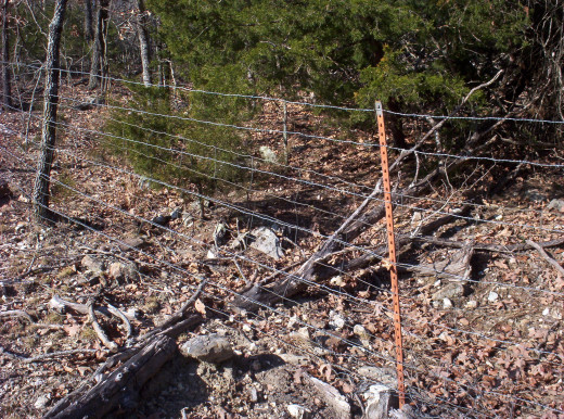 Goat Fencing (built with 47 inch high field web wire placed on an old cattle fence.)