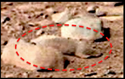 I recently conducted an independent poll on this photograph and was mildly surprised by my findings. Only six people out of 100 saw this image as a rock/stone, the other 94 saw it as an animal. This photograph was taken by NASAs Mars Curiosity rover.