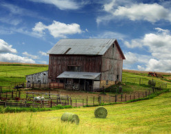 The Evolution of Modern Industrial Farming - or Why Buy Local?