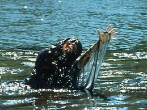 "The slime in the water will stop at nothing to eat everything in it's path in the episode of Creepshow 2 called ""The Raft""."
