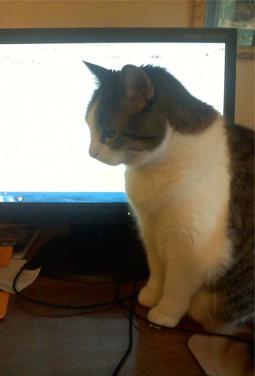 My cats can always tell when something is up and NaNoWriMo is no exception. Here one of my cats thinks she is helping me write...but not really!