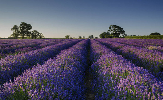 They will write you poetry in fields of lavender.