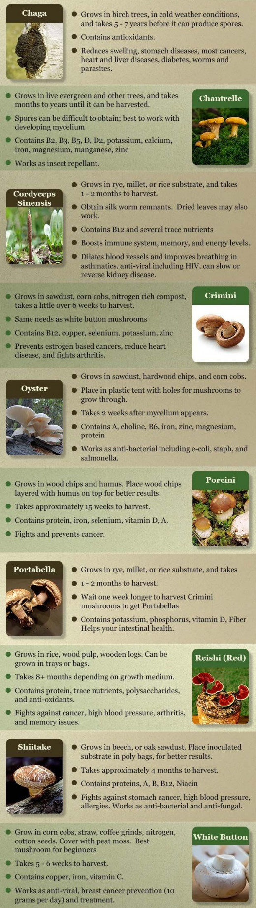 Check Out This Great Information About Mushrooms.