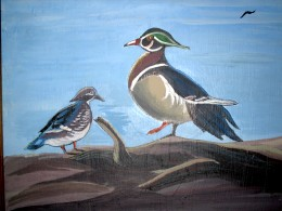 Wild Wood Ducks to pose...