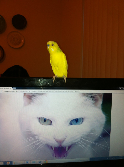 ...but I do have a little yellow bird.