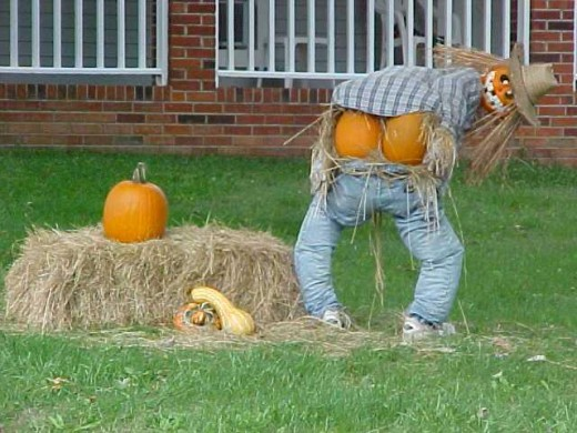 Notice That Only The Males Do This....Even Pumpkin Males...