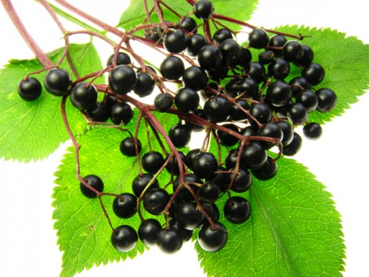Eldeberries, used to ward of the flu, and used in eldeberry wine - that will fix what ails you!