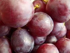 Grapes (vitis vinifera)