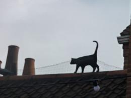 Cat 5