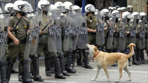 Brave Dog barking at Government riot police