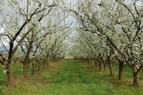 An orchard on the farm