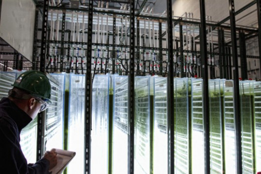 Commercial Scale Algae