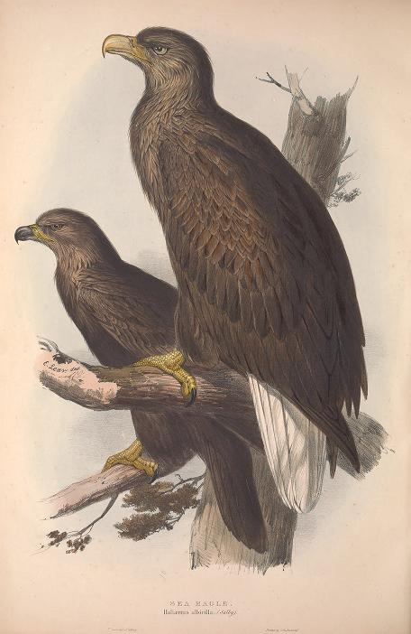 Gould Birds of Europe