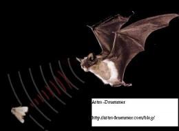 Bat's Sonar