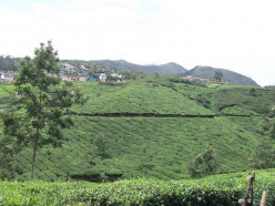 Get Set and Travel to Munnar in Kerala