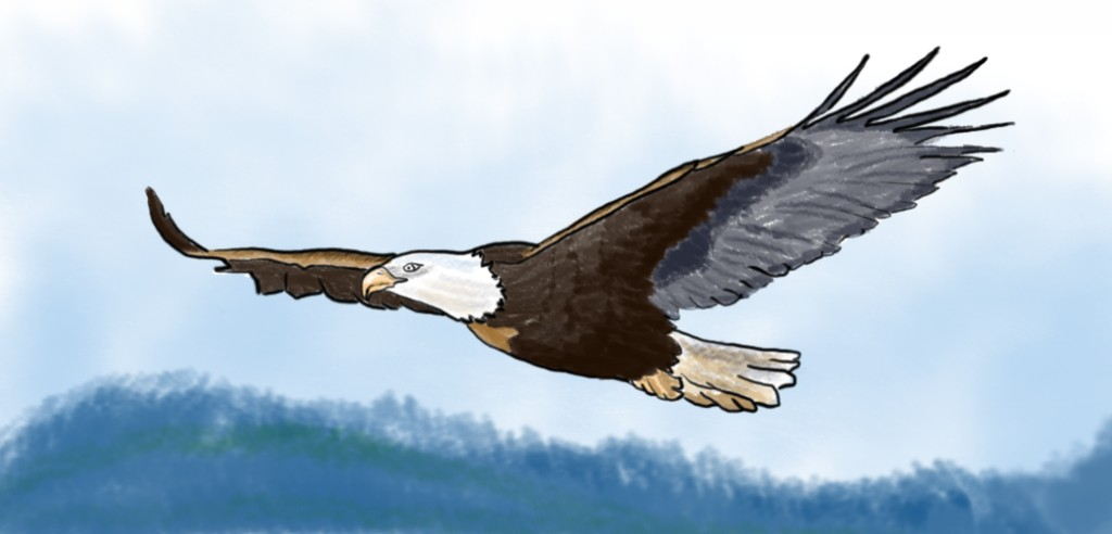 Bird Symbolism And Spiritual Gifts Exemplore