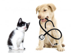 Pets for Your Good Health