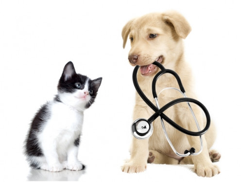 Pets Give Us Good Health Benefits.