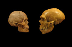 Initial Thoughts on My Neanderthal DNA
