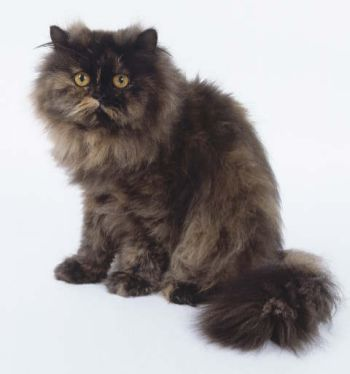 A Furry Cat waiting for National Hairball Day