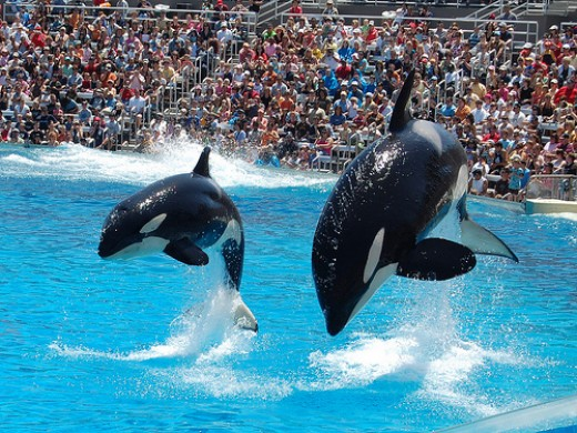 Dolphin Show, Sea World, San Diego