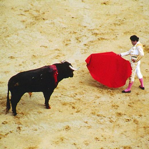 Bull Fight in Tijuana