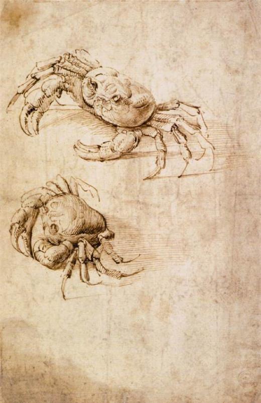 Crab sketch by Leonardo da Vinci at the Wallraf-Richartz Museum, Cologne.
