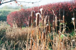 Cattails and wildflowers are in abundance year 'round at the Bully Hill Winery.