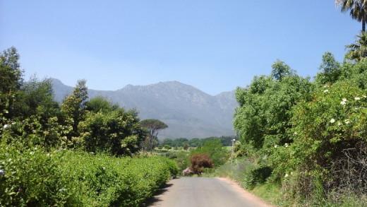 Wine route, Stellenbosch area, Cape Winelands, South Africa