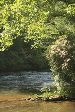 Chestatee River right behind your cabin