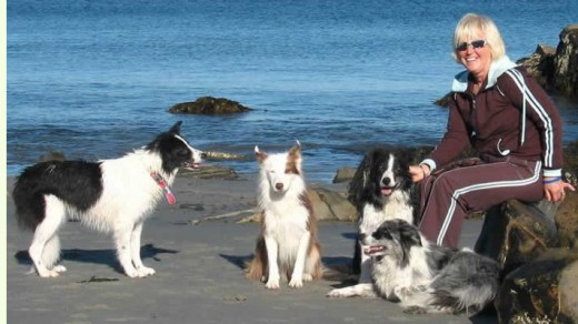 Dog Training In beach