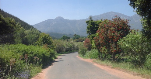 A wine route in the Stellenbosch region, Western Cape, South Africa