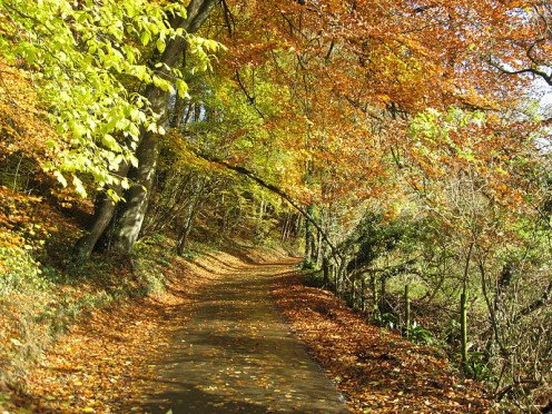 English country lane in Autumn. 2008 In the Public Domain