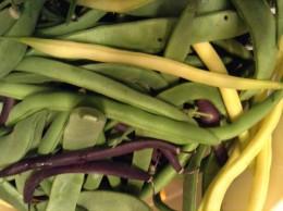 Purple bush beans have a great taste.