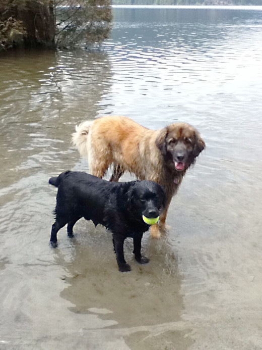 Ryan and Misha after a game in the water