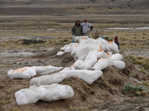 Jason Poole and Kenneth Lacovara with jacketed Dreadnoughtus bones in Argentina, 2006.