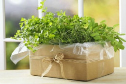 Starting an herb garden in a simple container makes a welcomed gift.