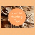 Deer Shed Hunting Tips