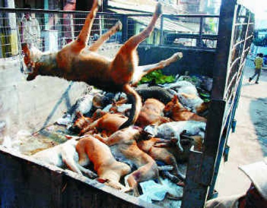 culling of the stray dogs