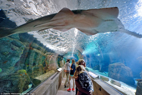 The Aquarium is an amazing experience that you walk through and become one with ocean life. The underground tunnel has sharks, swordfish and sting rays right before your eyes.