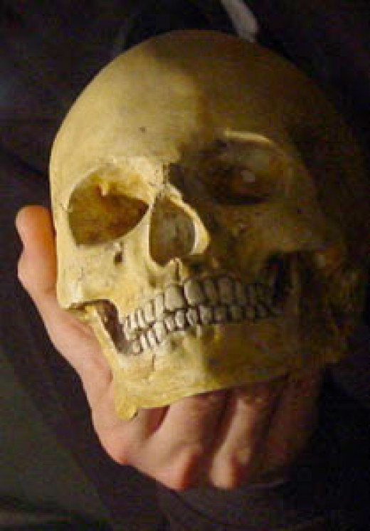 A plethora of objects was found on the site, including the intact cranium of a young adult woman