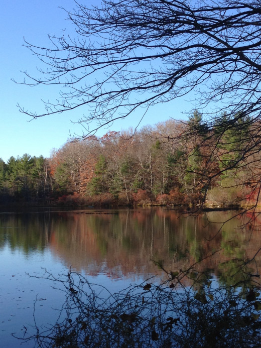 The Big Pond On The Property
