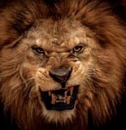 The roar of anger.