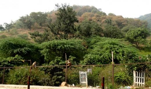 Kamad Giri Hill 2
